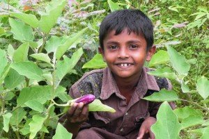 Little boy in vegetable garden