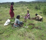Community members doing agricultural work