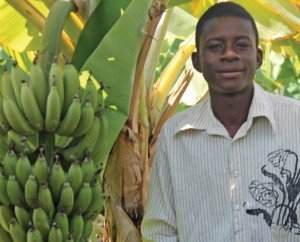 A young Zambian man who tends banana plants.