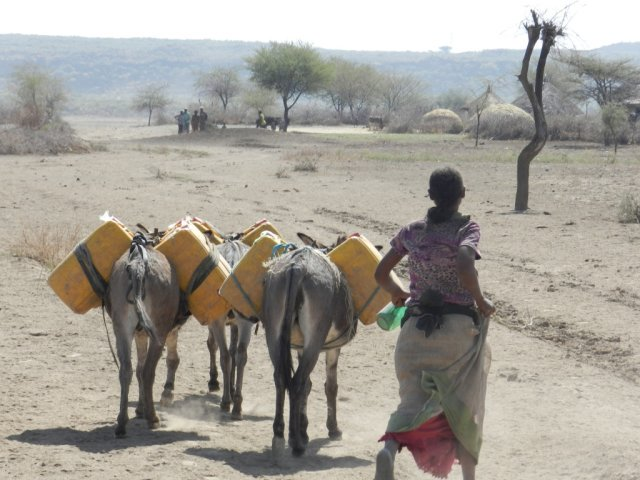 "We lost our crops and water because of shortage of rain which has brought food crises and with no water to drink..... Life is very hard! Caption: A woman walks alongside donkeys carrying containers for water in Boset, Ethiopia. The landscape, which was green and fertile just a few years ago, is dry and dusty from the lack of rain. Sequare, a mother of seven who lives in the village, says ""Every morning we wake up and look for the rain to come, to see hope, but it is dry here. Our only hope is the government and ChildFund."" tag = woman walking with three donkeys, donkey, livestock, animal, animals, yellow container, dry land, dust and tree, trees, dirt, quote"